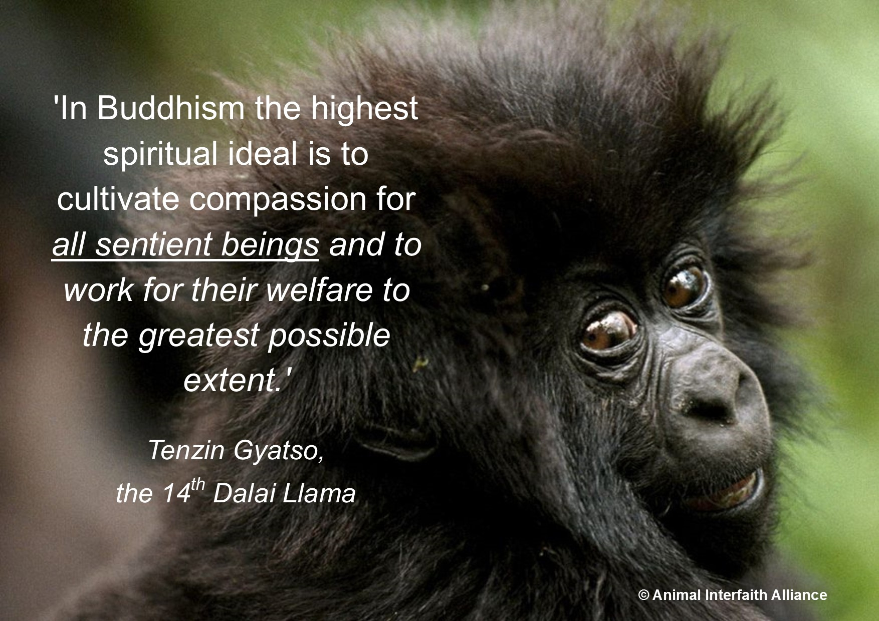 Image result for protect animal as sentient beings quotes & pictures gifs