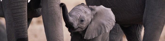 cropped-baby-elephant1.jpg