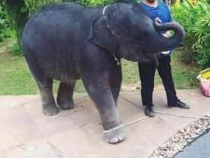 Baby Elephant Nadia