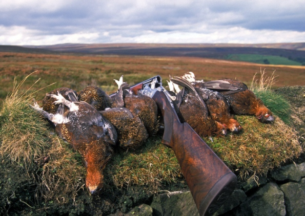 red-grouse-shot